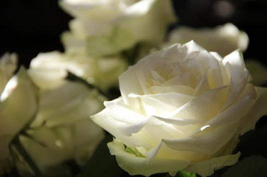 roses-108132_960_720